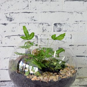 Scentsational Flowers - Fishbowl Terrarium - Large