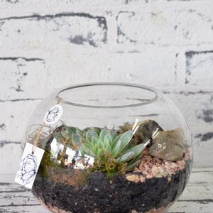 Scentsational Flowers - Fishbowl Terrarium - Medium