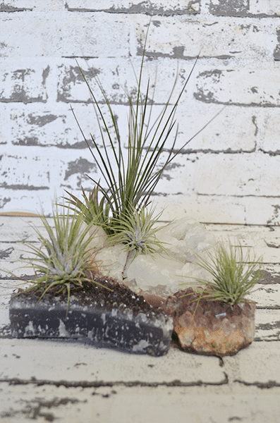 Scentsational Flowers - Crystal Airplants - Gifts for Teachers and Kris Kingle presents under $35