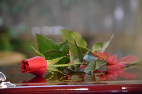 55.Single Rose